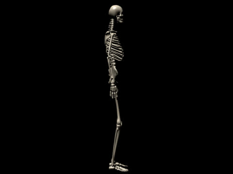 Human skeleton of a man for study Human skeleton of a man for study, spinning, great to be used in medicine works and health. Isolated on a black background.  physiology stock videos & royalty-free footage