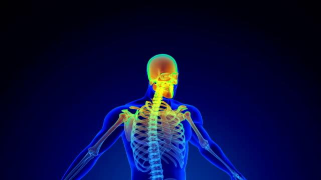 menschliche skelett-scan - gliedmaßen körperteile stock-videos und b-roll-filmmaterial