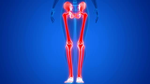 menschliches skelett system untere gliedmaßen anatomie - hüfte stock-videos und b-roll-filmmaterial