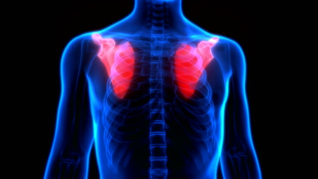 Human Skeleton System Scapula Anatomy 3D Illustration of Human Skeleton System Scapula Anatomy shoulder stock videos & royalty-free footage