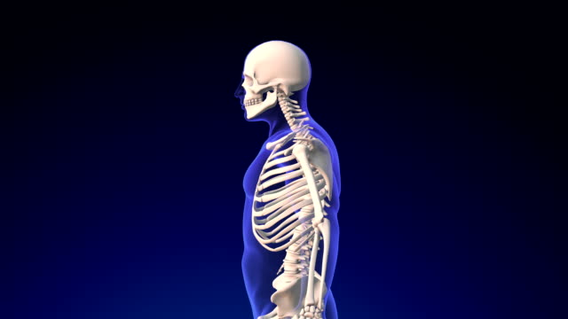 människans skelett - ben bildbanksvideor och videomaterial från bakom kulisserna
