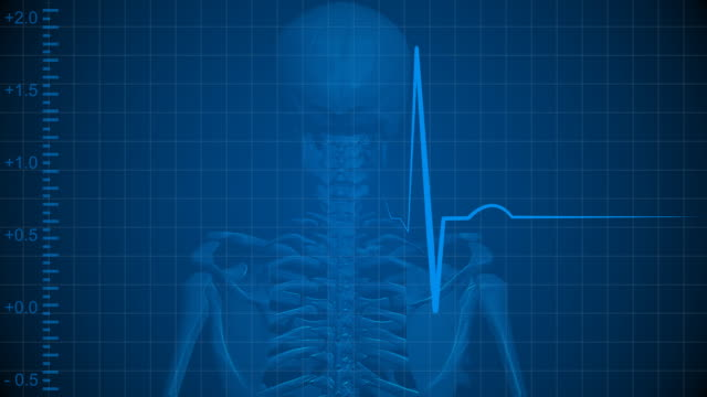 Human Skeleton With Pulse Trace video