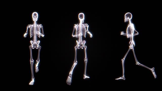 i̇nsan iskelet x-ray animasyon | loopable - i̇nsan i̇skeleti stok videoları ve detay görüntü çekimi