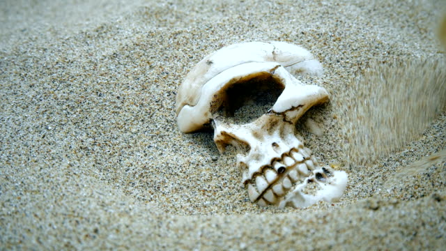 Human skull brushed from the sand Human skull brushed from the sand HD skull stock videos & royalty-free footage