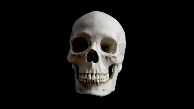 Human Skull Rotating Loop Adult human skull turning slowly on black background - Looped for endless playback skull stock videos & royalty-free footage