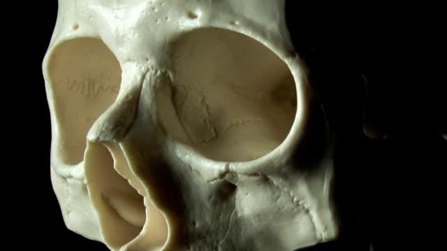 Human skull spinning, eyes close-up video