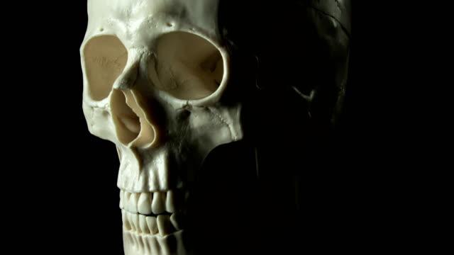 Human skull spinning video