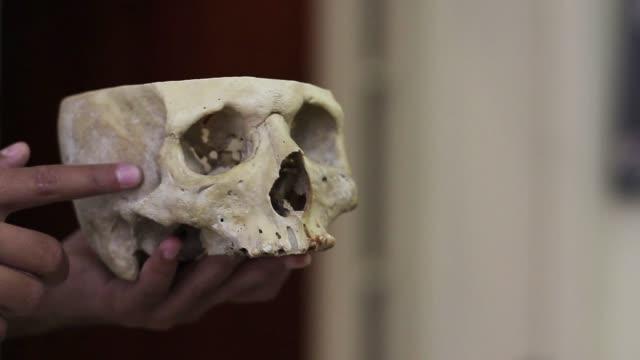 human skull. - archeologia video stock e b–roll