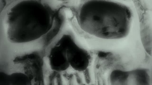 vidéos et rushes de crâne humain - charmeur