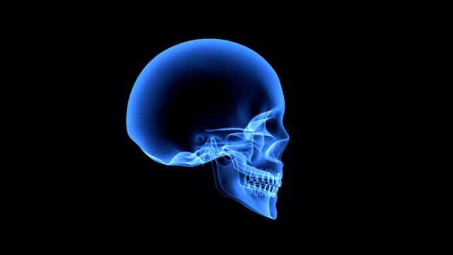 vídeos de stock e filmes b-roll de crânio humano - ventrículo do coração