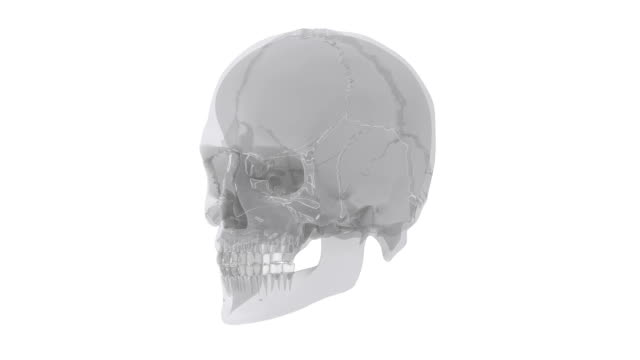 Human skull with skull bone parts in x-ray video