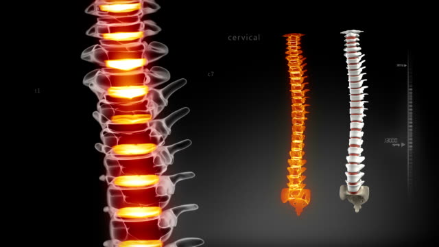 Human spine medical scan video