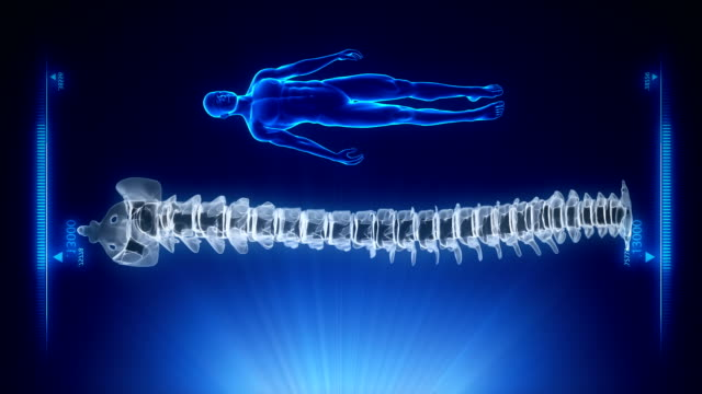 Human spine projection with highlighted intervertebral discs video