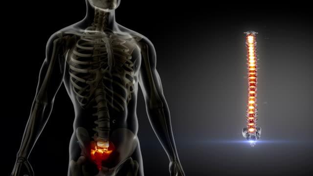 spina dorsale umana a raggi x scansione medica - posizione corretta video stock e b–roll