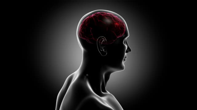3d human torso with brain and neurons flashing. synapsis. loopable. - människohuvud bildbanksvideor och videomaterial från bakom kulisserna