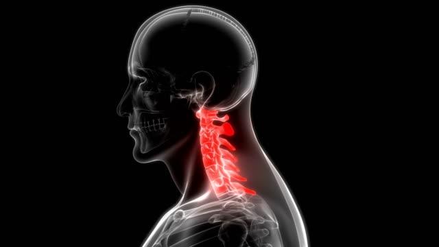 Human Vertebral Column Cervical Vertebrae Anatomy 3D Illustration of Human Vertebral Column Cervical Vertebrae Anatomy shoulder stock videos & royalty-free footage