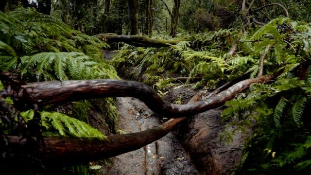 湿気のある熱帯残存林 - 恐竜点の映像素材/bロール