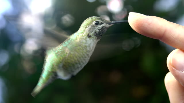 Hummingbird having Close Encounters of the Third Kind video