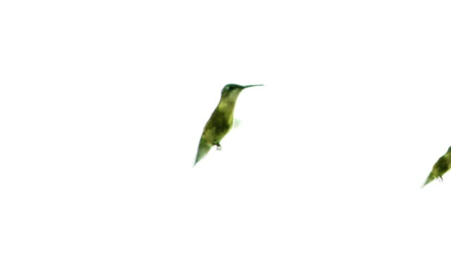 Hummingbirds Racing