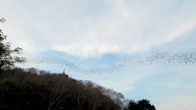 Hundred Million Bats flying nocturnal at Wat Khao Chong Pran in Ratchaburi Thailand video