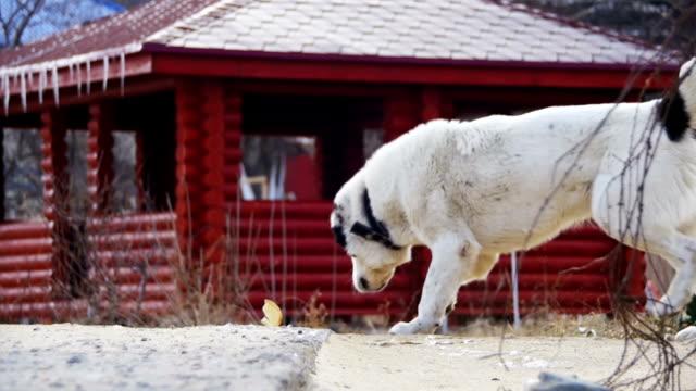 vídeos de stock e filmes b-roll de hungry big dog on the street in winter eats food. slow motion - dog food