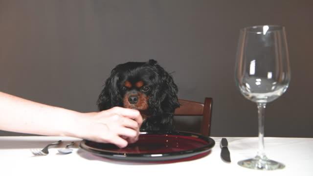 A hungry dog staring at food at a table