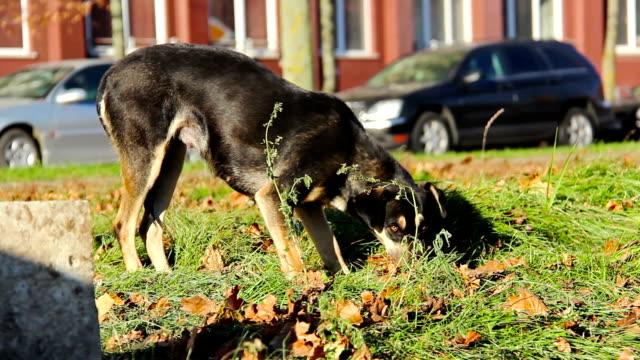 Hungry dog street video