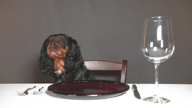 A hungry dog waiting for food at a table