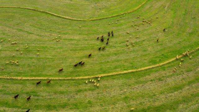 hungrige weidetiere lieben eine gute grüne wiese - ranch stock-videos und b-roll-filmmaterial