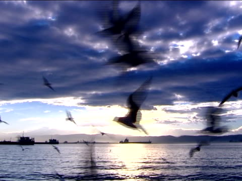 hungry gulls hungry seagulls, and ships water bird stock videos & royalty-free footage