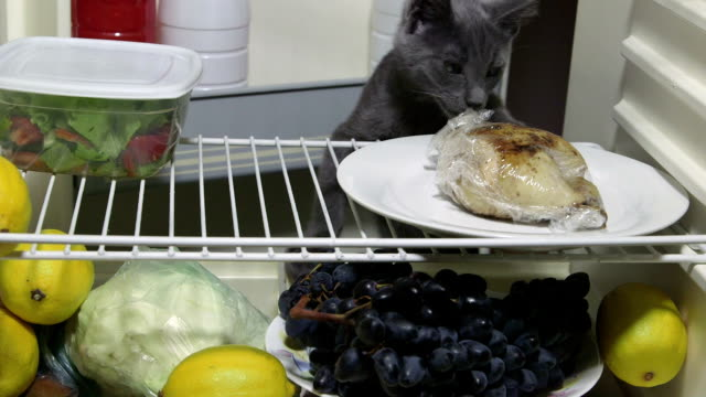 Hungry kitten looking for food inside domestic fridge video