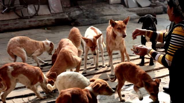 Perros hambrientos de la calle - vídeo