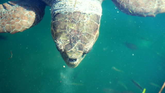 Hungry turtle video