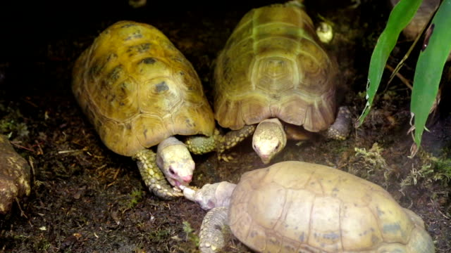 Hungry turtles