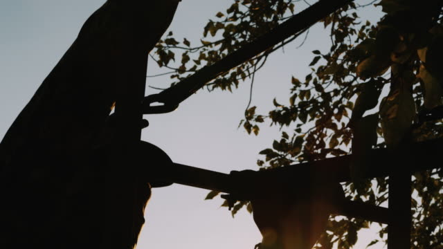 A hunter climbs a tree stand and gets into position s the sun beautiful backlights his climb up the stairs into the trees. video