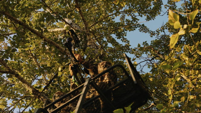 a hunter is hardly visible as he sits in his tree stand and nocks an arrow as he waits for the animals he is hunting to walk by as the golden light of sunset hits the trees leaves giving off a beautiful hue. - cacciatore video stock e b–roll