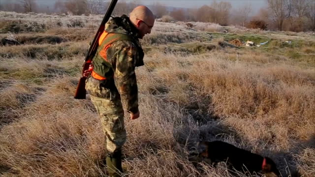 Hunter moving with shotgun looking for prey Hunter moving with shotgun looking for prey purebred dog stock videos & royalty-free footage