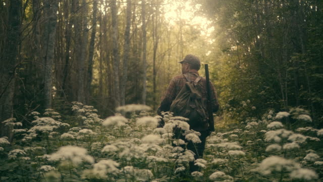 hunter walking in the forest with shotgun (slow motion) - cacciatore video stock e b–roll