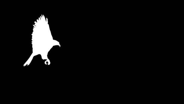 Hunting Eagle (Loopable) video