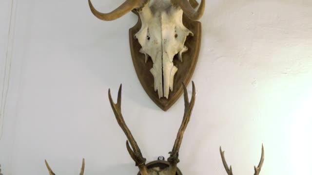 Hunting trophy. Animal skull with horn. Set of skulls.