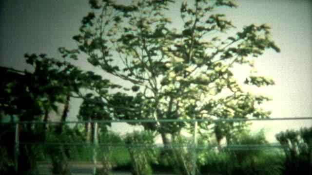 (8mm Vintage) Hurricane Blowing Big Trees video