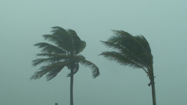 uragano palme - uragano video stock e b–roll