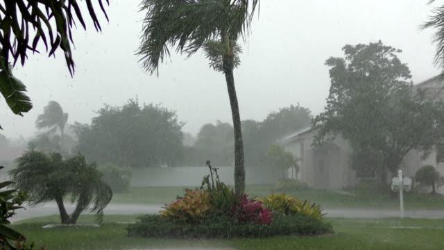 Hurricane winds in Florida video