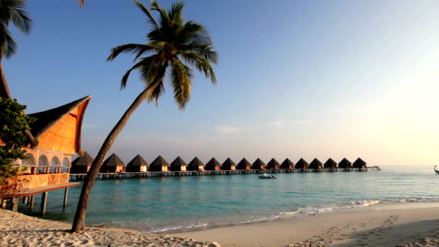 Huts in the sea and a palm tree video