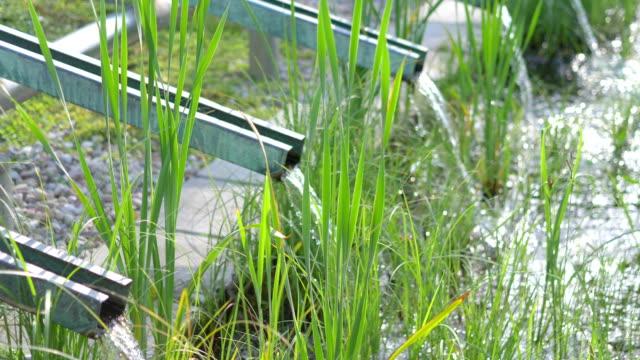 hydrating bio-pflanzen auf öko-bauernhof in 4k zeitlupe 60fps - wassersparen stock-videos und b-roll-filmmaterial