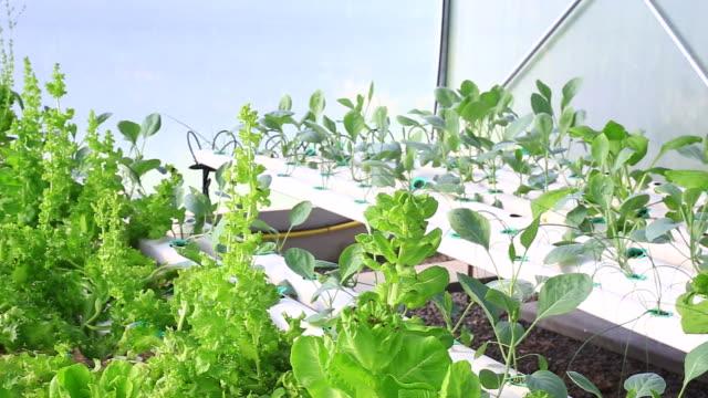 hydroponic garden video
