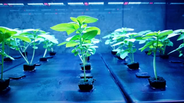 hydroponics lab growth crop 4k - science stock videos & royalty-free footage