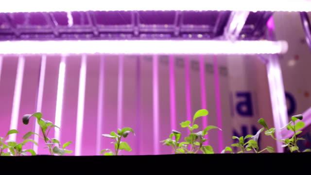 Hydroponics method of growing plants in water. UV grow lights for growing plants UV grow lights for growing plants. hydroponics Vegetable Farm. hydroponics stock videos & royalty-free footage