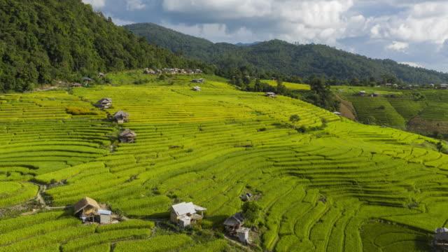 hyperlapse of rice terrace aerial view with cloudy sky - taras ryżowy filmów i materiałów b-roll
