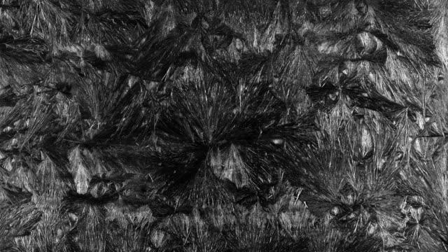 is blommor frost - glas material bildbanksvideor och videomaterial från bakom kulisserna